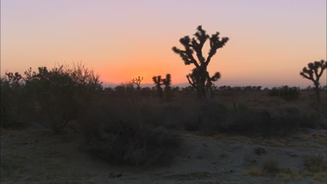 vídeos de stock, filmes e b-roll de a desert landscape is seen at golden hour. - arbusto tropical
