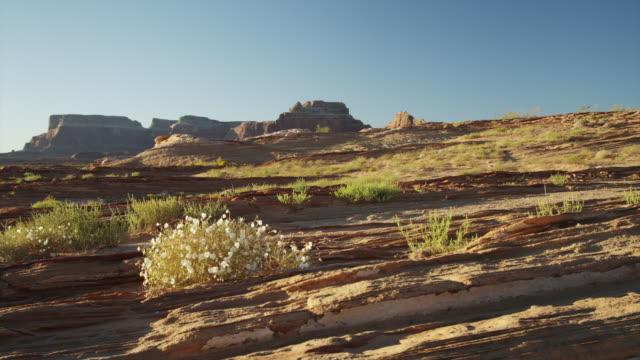ws ds desert landscape / lake powell, utah, usa - lake powell stock videos & royalty-free footage