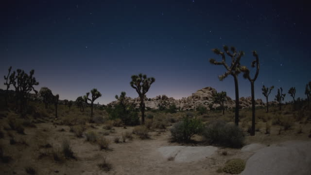 t/l, ws, desert landscape, night to day, joshua tree national park, california, usa - joshua tree national park stock videos & royalty-free footage