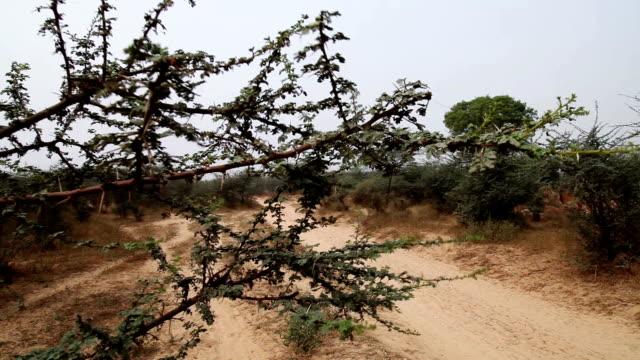 desert landscape - hd format stock videos & royalty-free footage