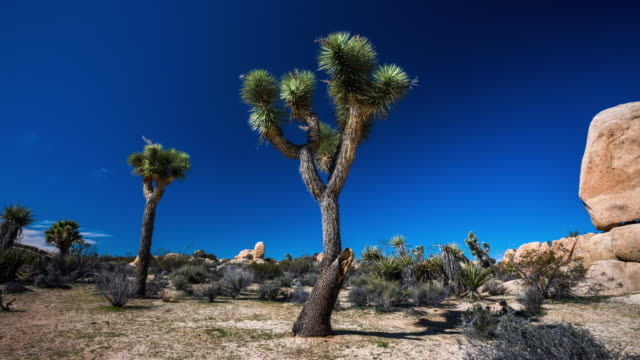time lapse: desert landscape with in joshua tree national park, usa - tracking shot - joshua tree national park stock videos & royalty-free footage