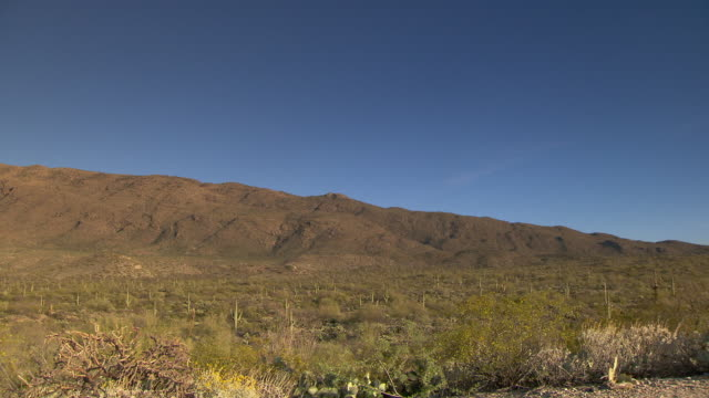 Desert landscape with Saguaro cactus and blue skies - wide angle pan