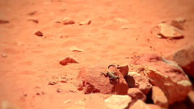 desert lizard - extinct stock videos and b-roll footage