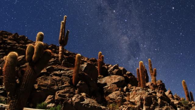 desert night sky and cactus forest - san pedro de atacama stock videos & royalty-free footage