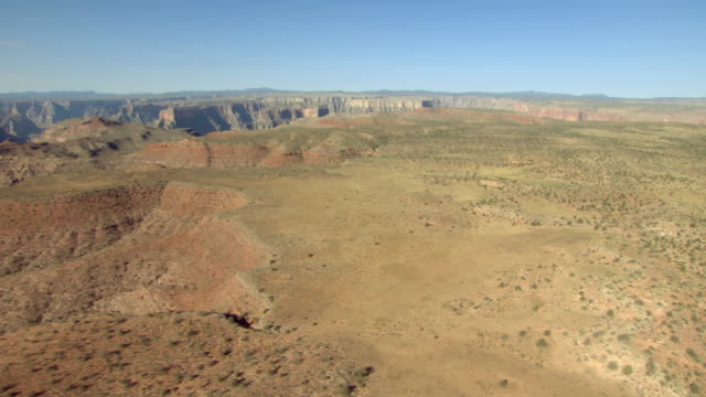 Desert plants cover the rim of the Grand Canyon.