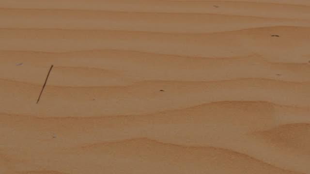 Desert Safari near Dubai, Dubai, United Arab Emirates, Middle East, Asia