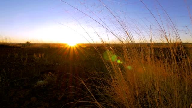 砂漠の日の出 - ガラパゴスウチワサボテン点の映像素材/bロール