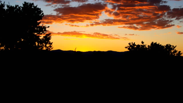 desert sunset: new mexico - cactus sunset stock videos & royalty-free footage