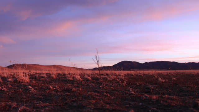 desert sunset time lapse - cactus sunset stock videos & royalty-free footage
