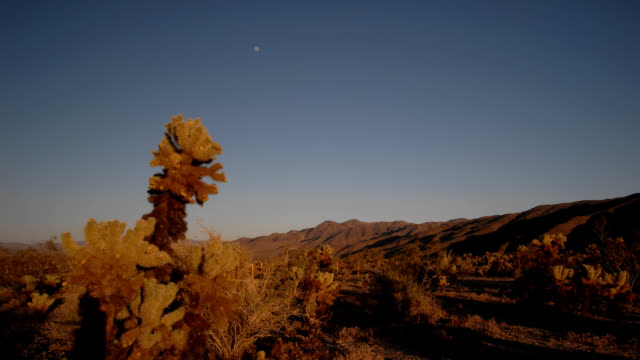 desert sunset timelapse - cactus sunset stock videos & royalty-free footage