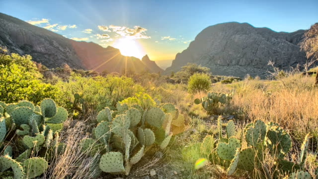 deserto tramonto - cactus video stock e b–roll