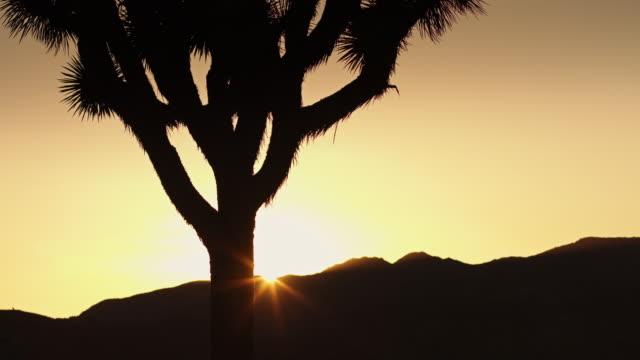 desert sunset - cactus silhouette stock videos & royalty-free footage