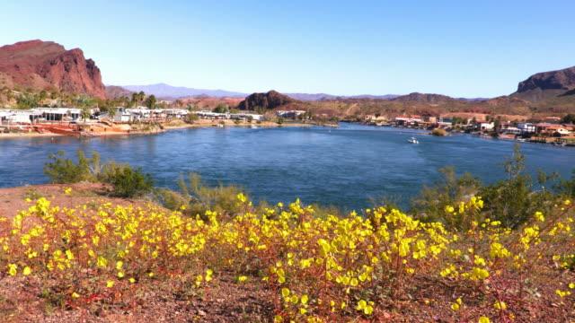 vidéos et rushes de fleurs sauvages du désert près de la ville de lake havasu - arizona