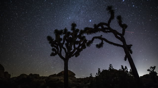 time lapse: desert with joshua trees at night - tracking shot - joshua tree national park stock videos & royalty-free footage