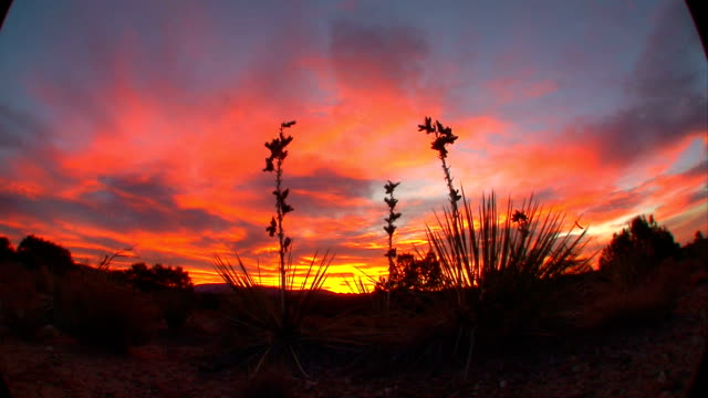 desert yucca bush & clouds - yucca stock videos & royalty-free footage