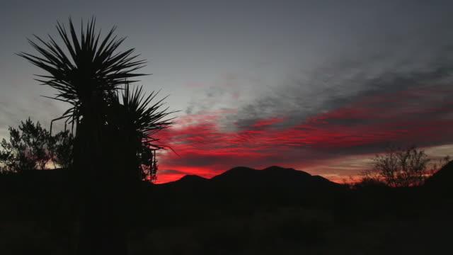 vídeos de stock, filmes e b-roll de yucca nascer do sol no deserto de hueco tanks state park texas - arbusto tropical