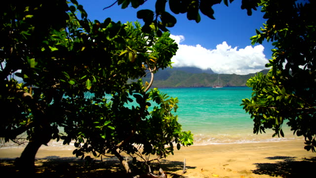 deserted ocean beach lush vegetation tahuata marquesas pacific - south pacific ocean stock-videos und b-roll-filmmaterial