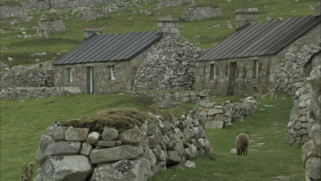 ws deserted street in the village on the uninhabited island of st kilda in the hebrides on the west coast of scotland with one grazing soay sheep - sheep stock videos & royalty-free footage