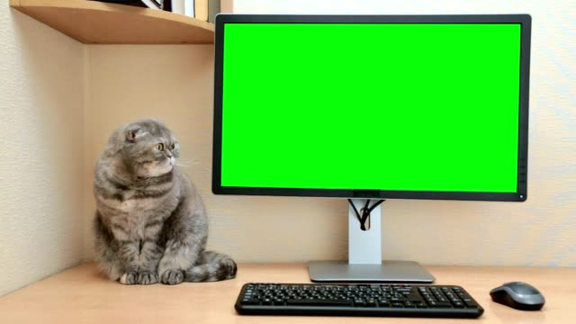 vídeos de stock e filmes b-roll de desktop computer with a green screen in the home room. - one animal