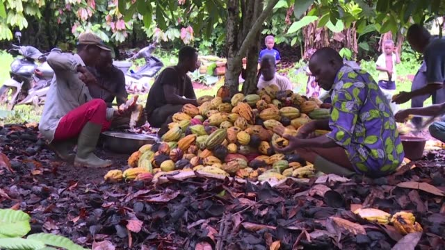 despite ivory coast's position as the world's leading cocoa producer more than half of ivorian producers live below the poverty line - côte d'ivoire stock videos & royalty-free footage