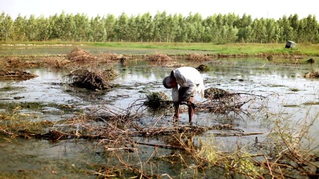 Zerstört die Ernte durch Hochwasser und Starkregen