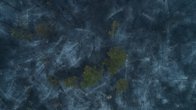 destroyed forest after fire from aerial view - burnt stock videos & royalty-free footage