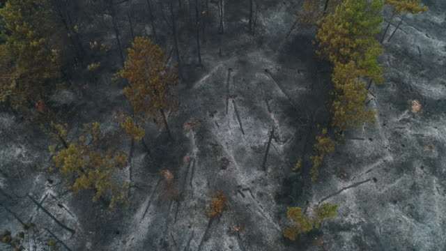 destroyed forest after fire from aerial view - forest fire stock videos & royalty-free footage