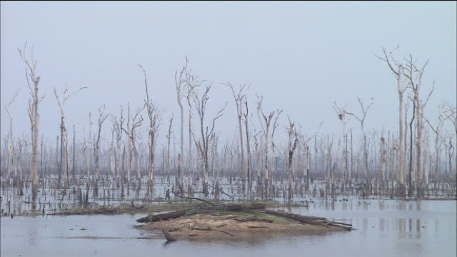 destruction of forest dead-trees dam lakes rondonia madeira-river - rio delle amazzoni video stock e b–roll