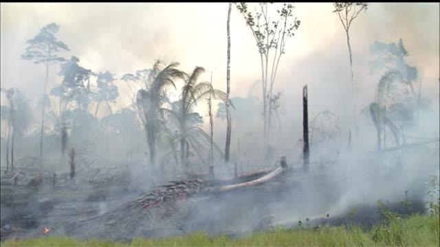Destruction of forest/Slash & Burn/Jungle/Tropical Rainforest/Rondonia State/Amazon/Brazil