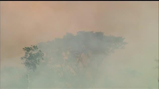 vídeos de stock, filmes e b-roll de destruction of forest/slash & burn/jungle/tropical rainforest/rondonia state/amazon/brazil - amazonas state brazil