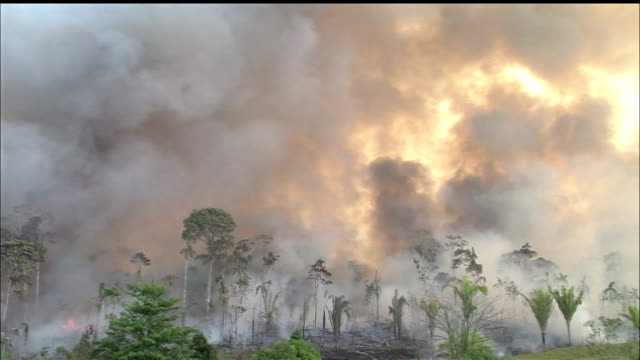 destruction of forest/slash & burn/jungle/tropical rainforest/rondonia state/amazon/brazil - burning video stock e b–roll