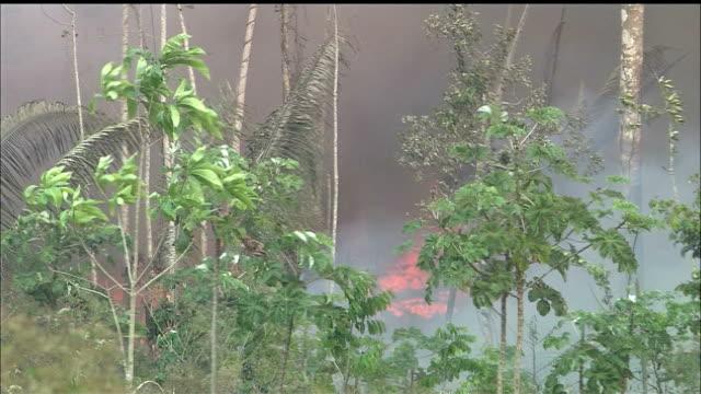 vídeos de stock e filmes b-roll de destruction of forest/slash & burn/jungle/tropical rainforest/rondonia state/amazon/brazil - amazonas state brazil