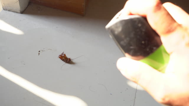 destruction of insect pest - pests stock videos & royalty-free footage