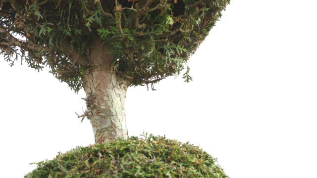 detail formal garden. - annick vanderschelden stock videos & royalty-free footage
