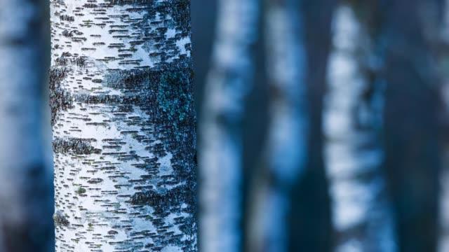 stockvideo's en b-roll-footage met detail of birch in urkiola natural park - berk