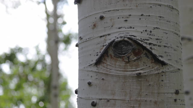 detail of birch tree - plant bark stock videos and b-roll footage
