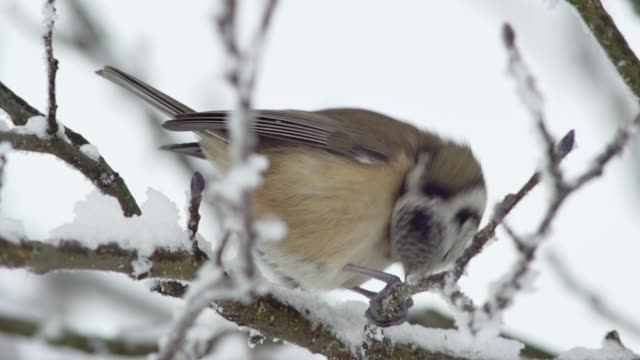Detail of bird on snow covered branch