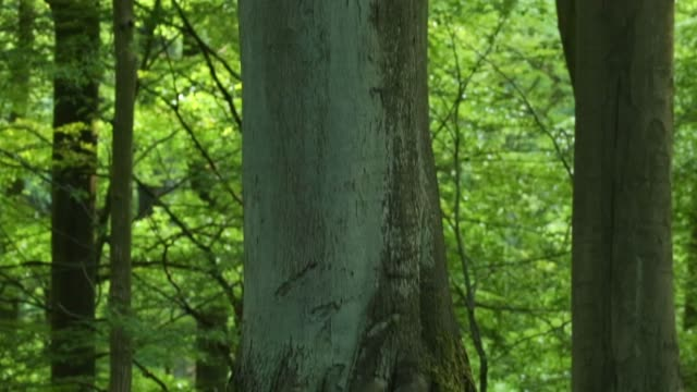 detail of deciduous tree trunk - deciduous tree stock videos & royalty-free footage