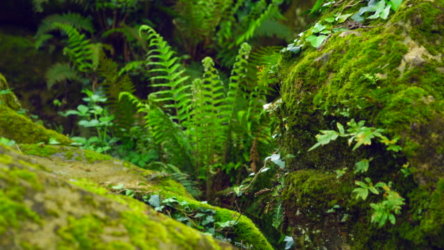 detail of ferns in the forest - moss stock videos & royalty-free footage