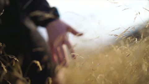 vidéos et rushes de détail de la main se déplaçant par l'herbe grande au coucher du soleil - vie simple