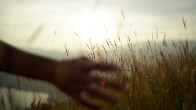 vidéos et rushes de detail of hand passing through tall grass - perception sensorielle