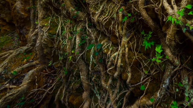 detail of ivy in the forest - territorio video stock e b–roll
