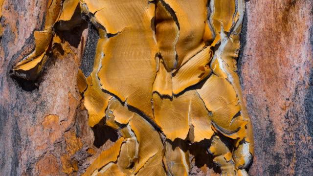 Detail of Kiver Tree