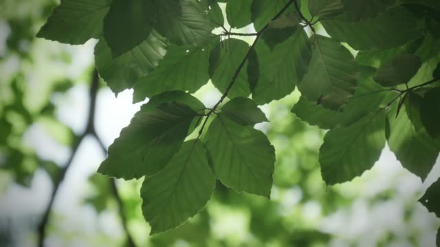 Detail of leaves in forest