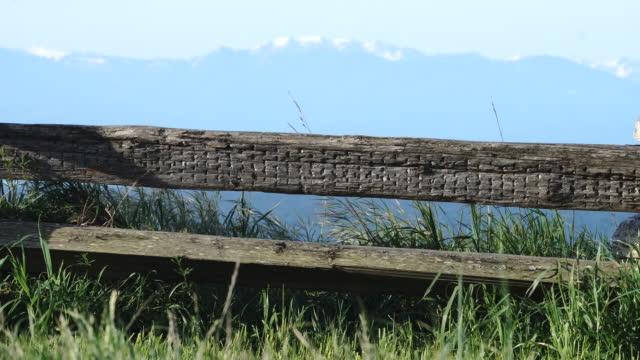 人間の胴体下部フェンス稜線に沿って歩くの詳細 - カナダ ビクトリア市点の映像素材/bロール