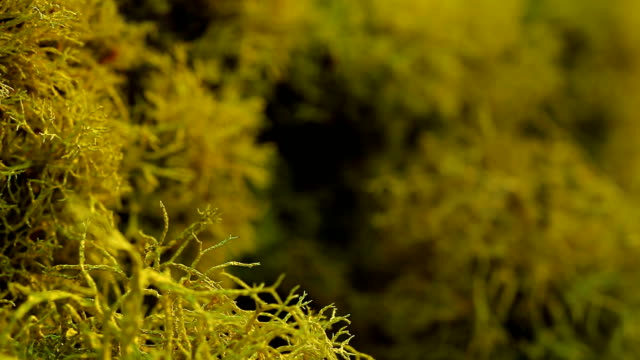 detail of moss growing on tree. - moss stock videos & royalty-free footage