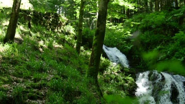 vidéos et rushes de détail des plans avec la rivière qui coule au fond - simplicité