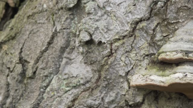 Detail of polypore fungi on tree trunk