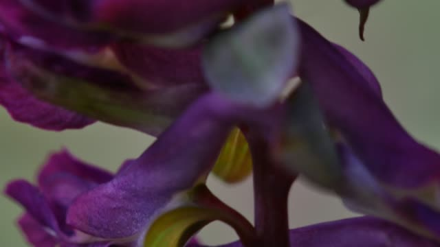 detail of purple wildflower cluster - baden wurttemberg stock videos and b-roll footage