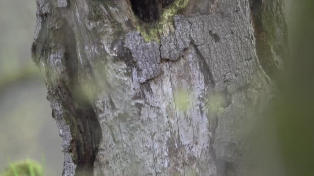 detail of rotting deciduous tree - deciduous tree stock videos & royalty-free footage